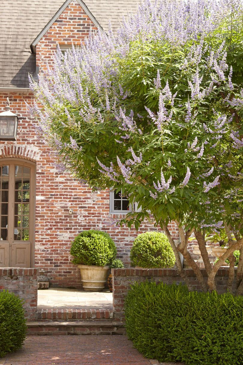 Comfy Flowering Tree Design Ideas For Your Home Yard01