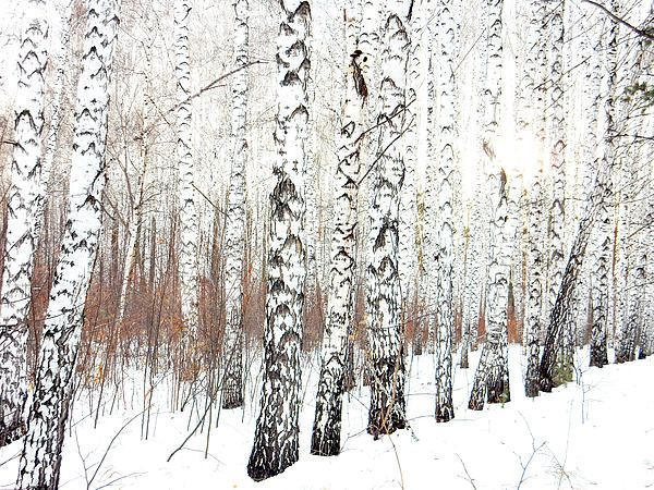 Delicate Multiple Winter Tree Design Ideas To Try Asap14