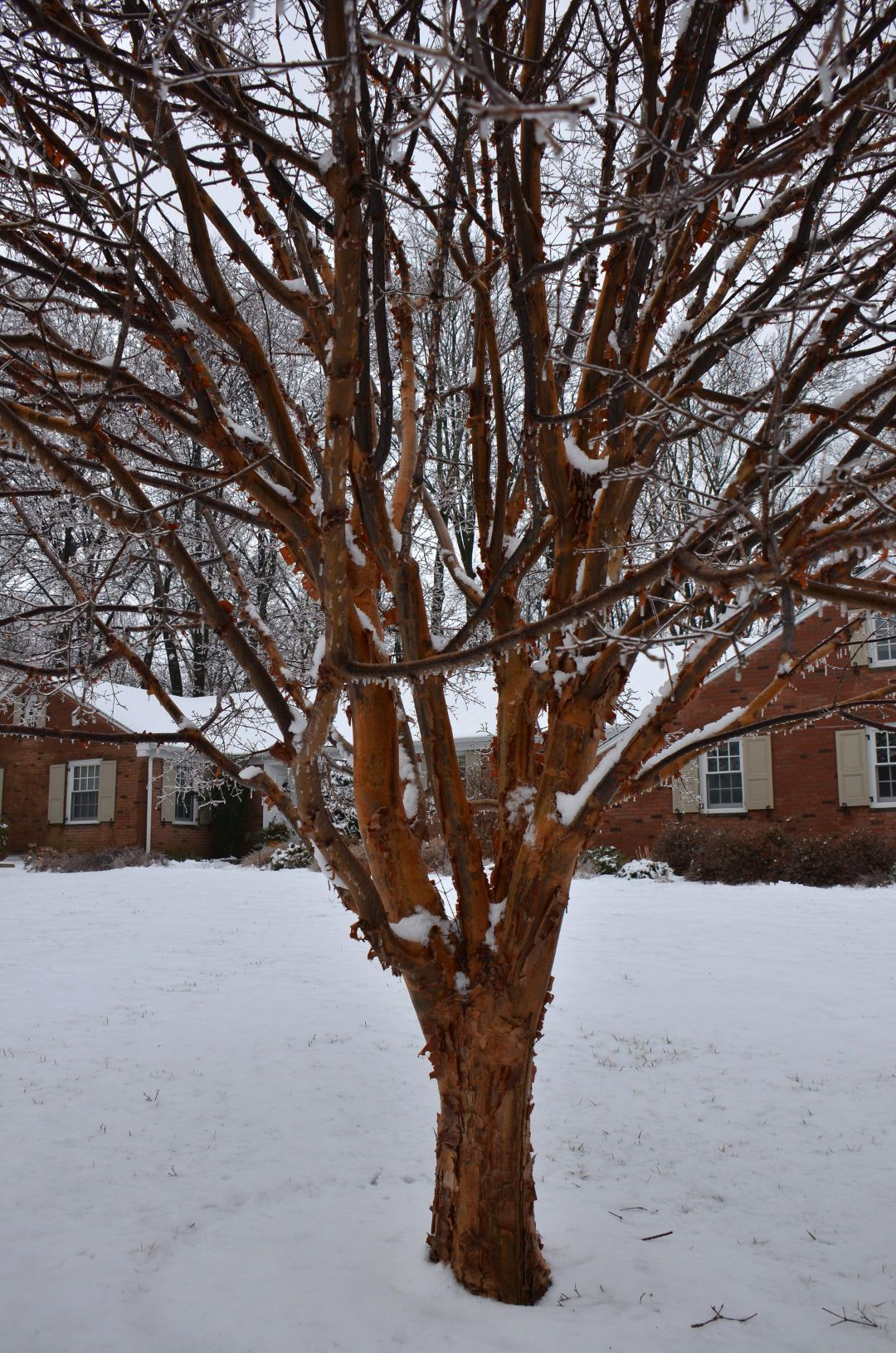 Delicate Multiple Winter Tree Design Ideas To Try Asap15