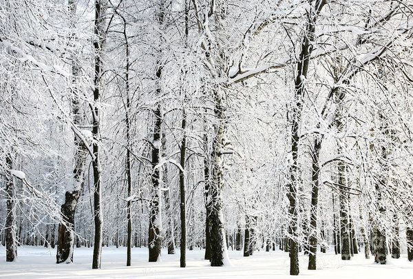 Delicate Multiple Winter Tree Design Ideas To Try Asap21