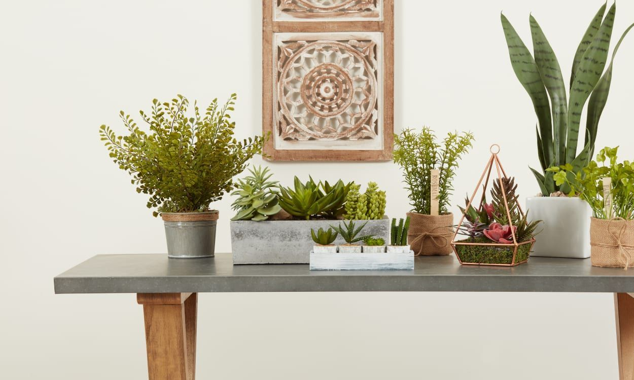 Fascinating Indoor Plants Design Ideas With Desert Atmosphere To Have17