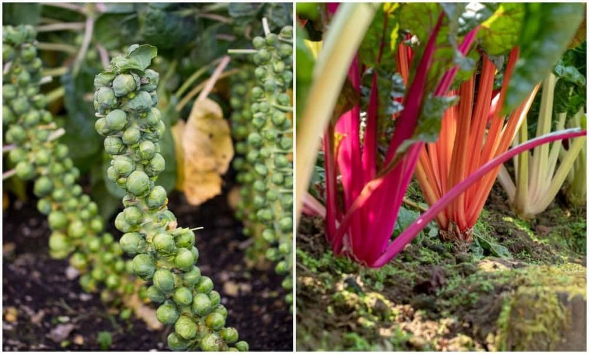 Wonderful Veggies And Fruits Potted Design Ideas For Your Garden 09