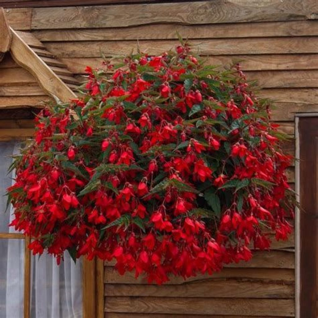 Creative Blooming Hanging Baskets For Garden Year Round 06