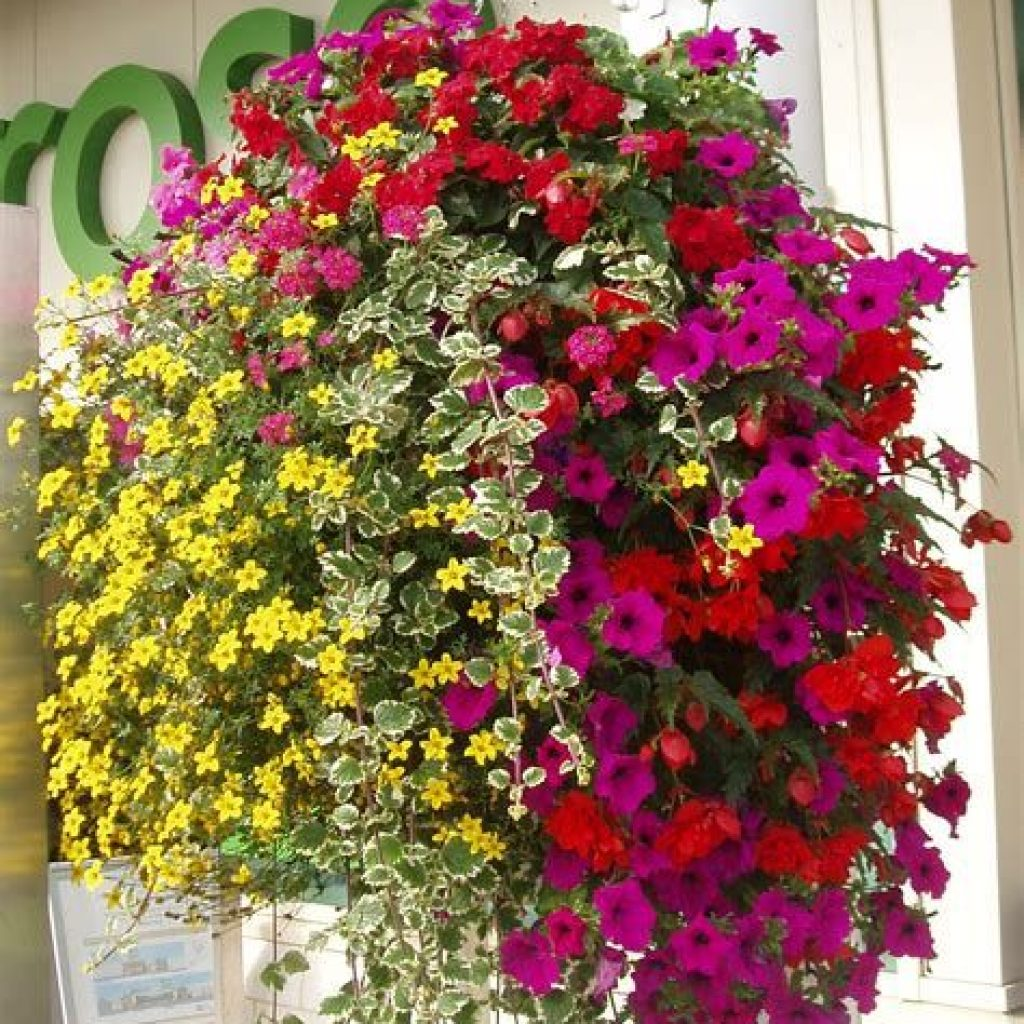 Creative Blooming Hanging Baskets For Garden Year Round 10