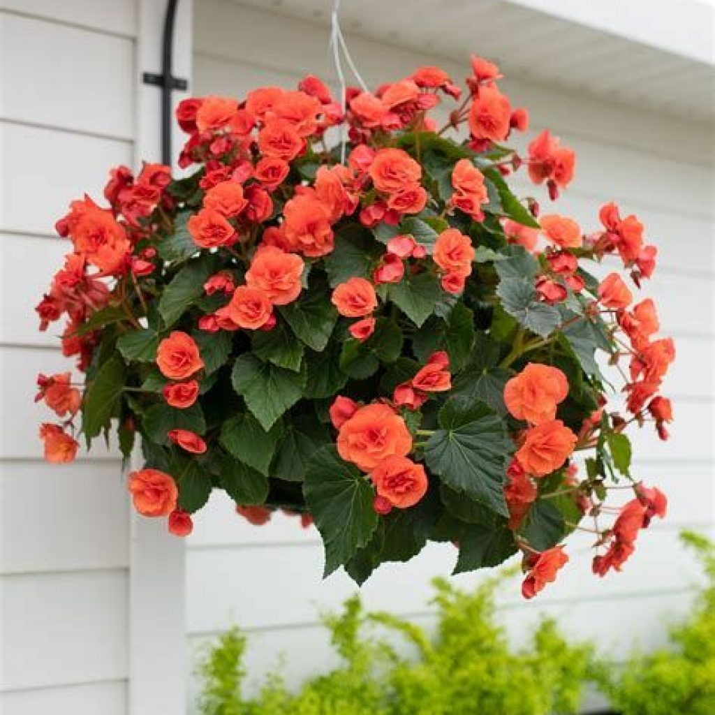 Creative Blooming Hanging Baskets For Garden Year Round 12