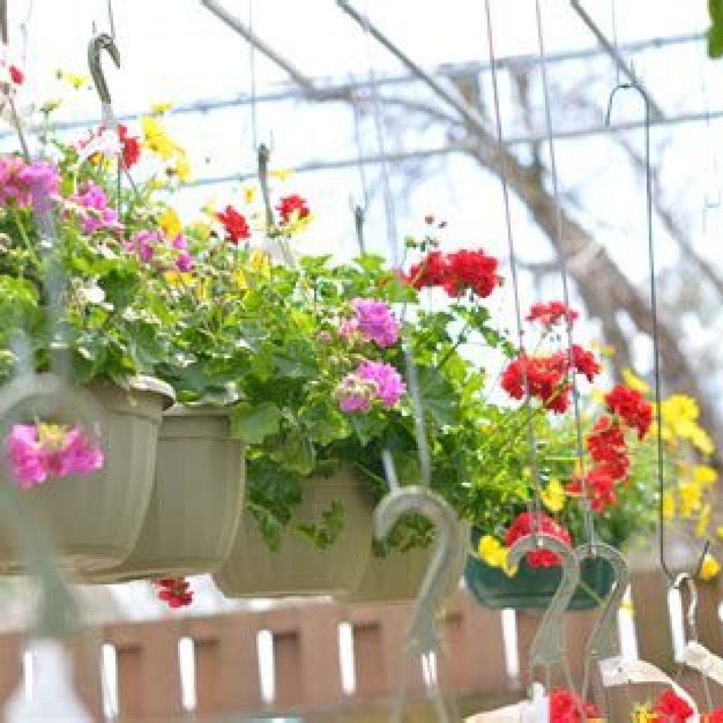 Creative Blooming Hanging Baskets For Garden Year Round 13