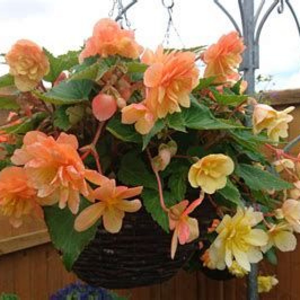 Creative Blooming Hanging Baskets For Garden Year Round 14