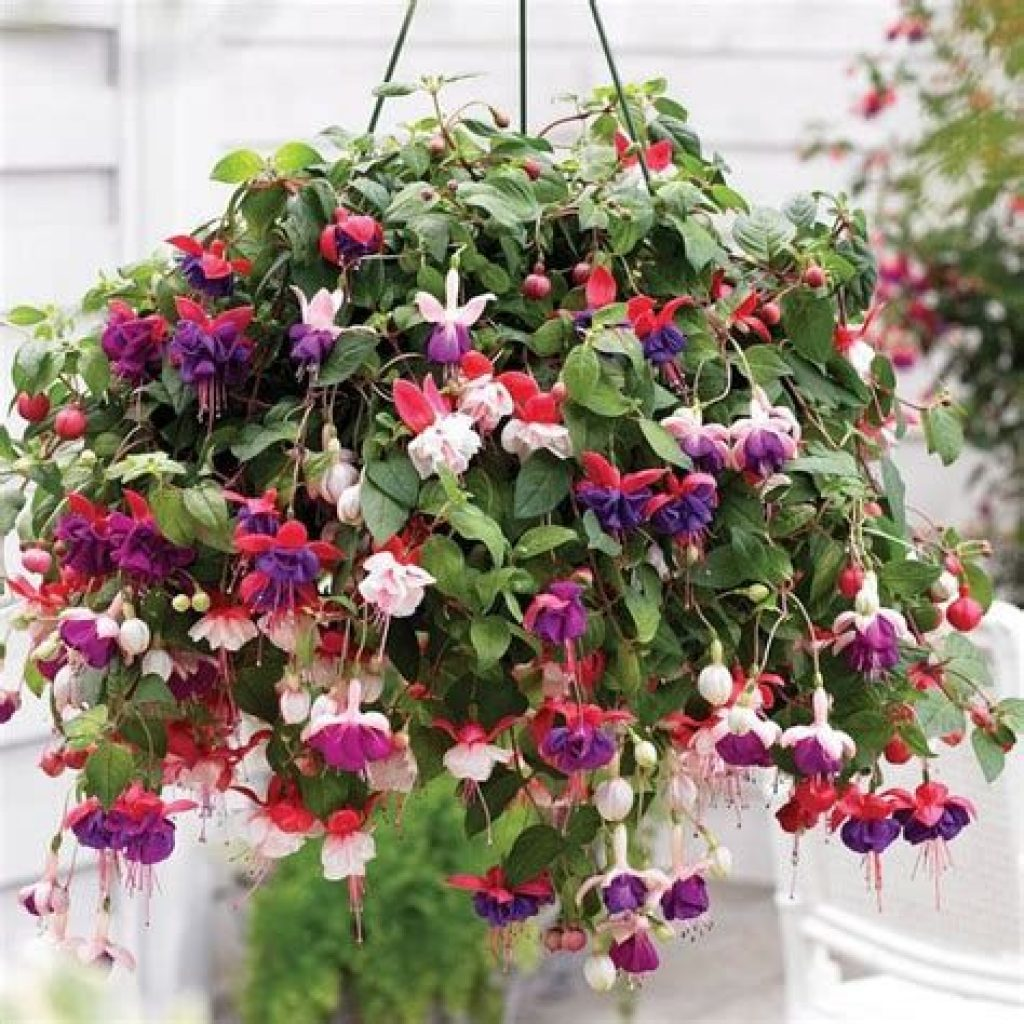 Creative Blooming Hanging Baskets For Garden Year Round 15