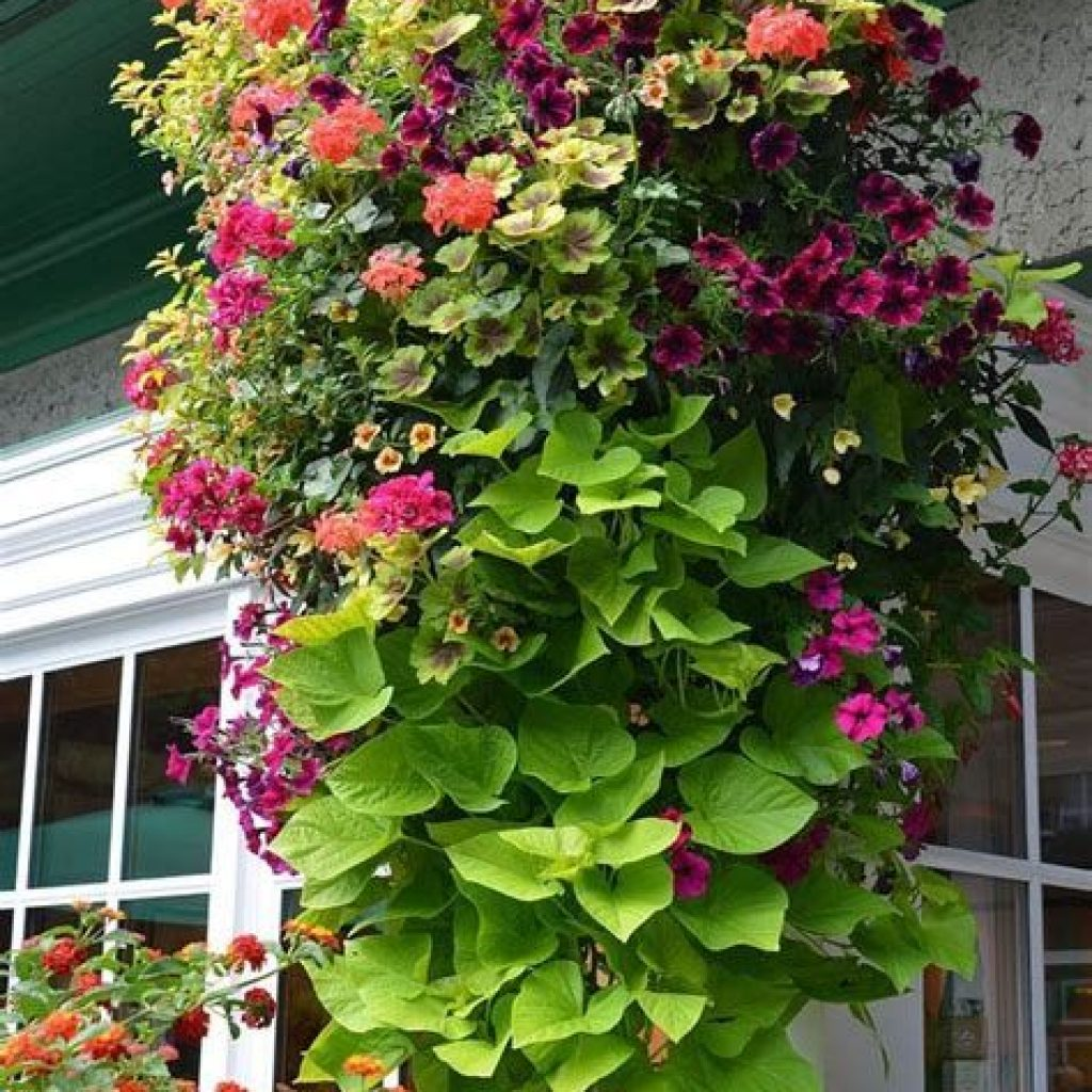 Creative Blooming Hanging Baskets For Garden Year Round 32