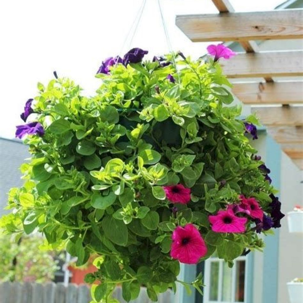 Creative Blooming Hanging Baskets For Garden Year Round 43
