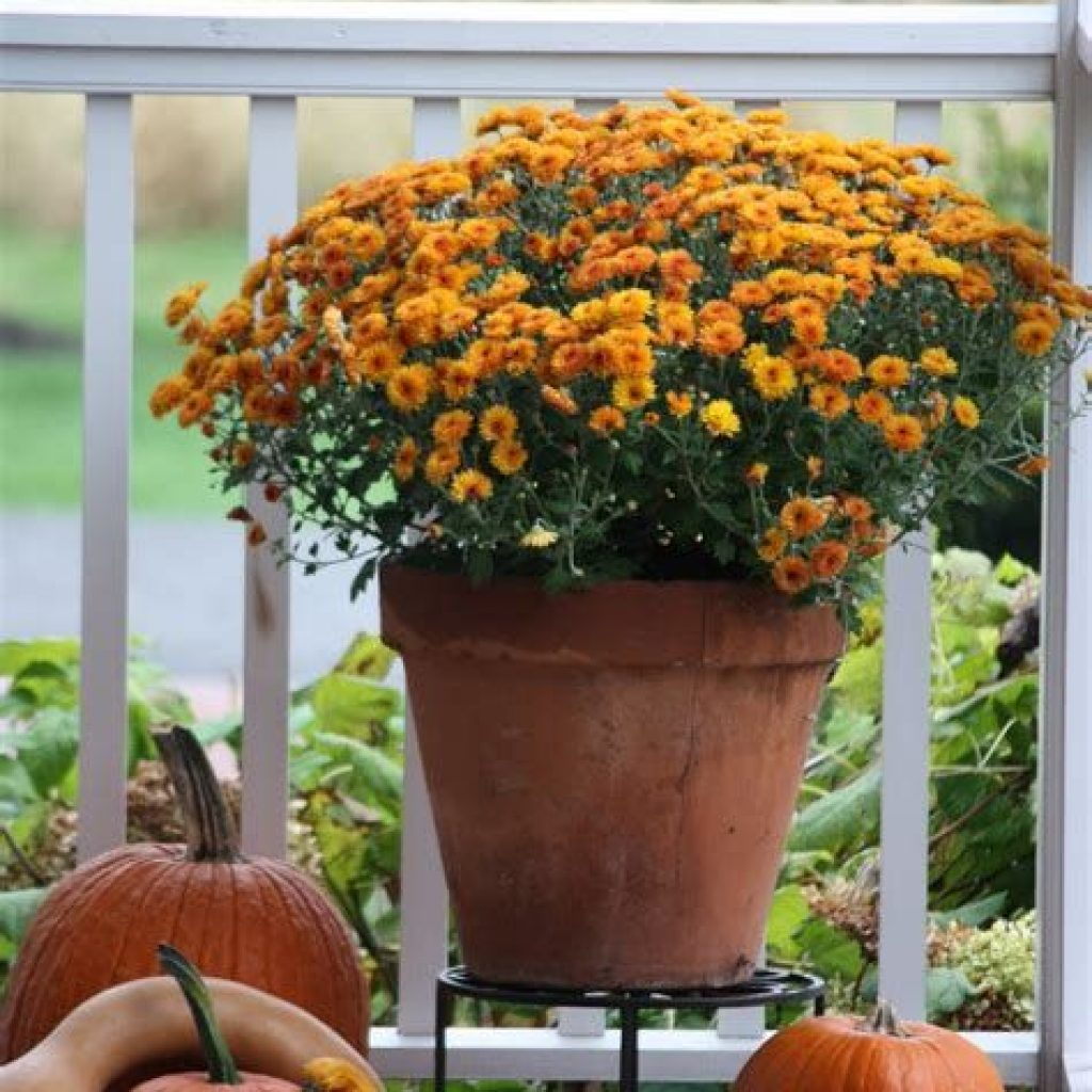 Fantastic Backyard Decoration For Fall This Year 18